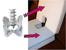 Bones of the upper pelvis and lower spine are supported by the Triple-CV Coccyx Cushion